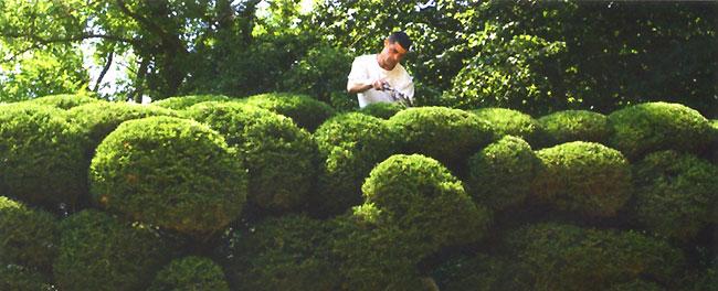 Marc Nucera - Compression végétale